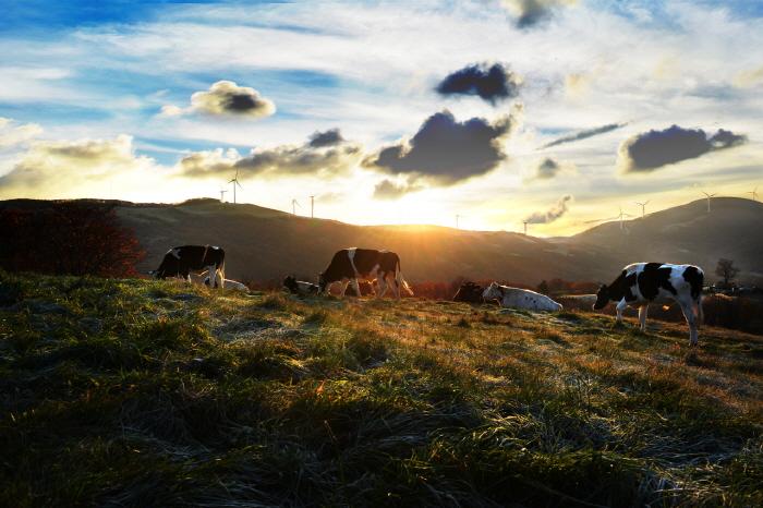 KTO_3712004201710011k_Daegwallyeong Samyang Ranch