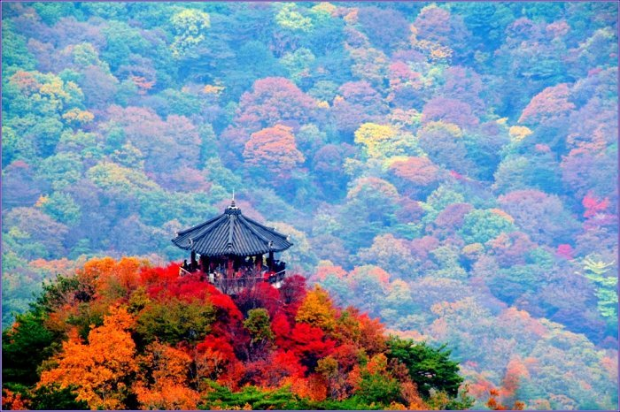Korea Tour Autumn Foliage