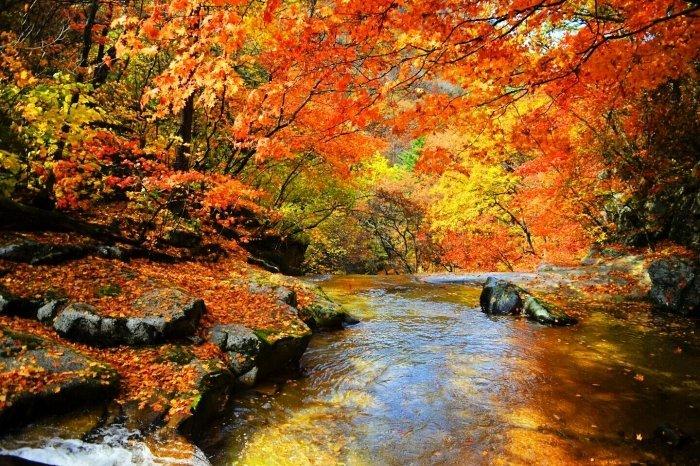 Korea Tour Autumn Foliage