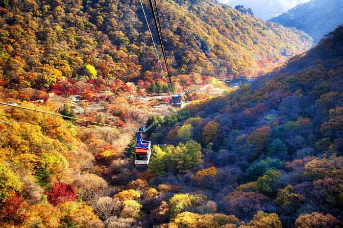 Mt. Naejang Autumn foliage tour